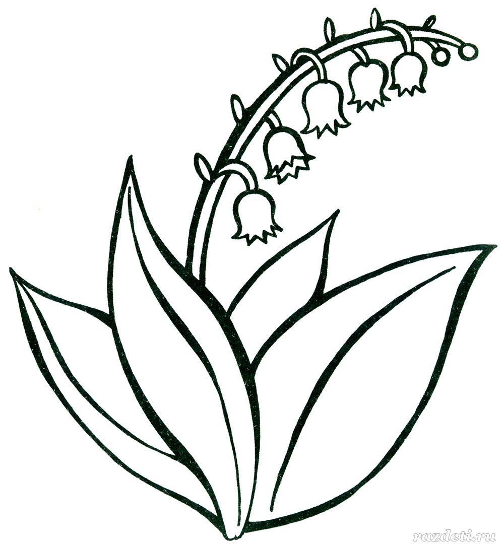 Цветок ландыш для раскраски