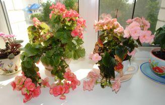 Фото цветы дома на подоконнике