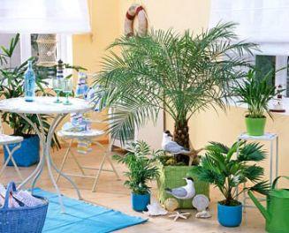 Комнатные растения фото в интерьере