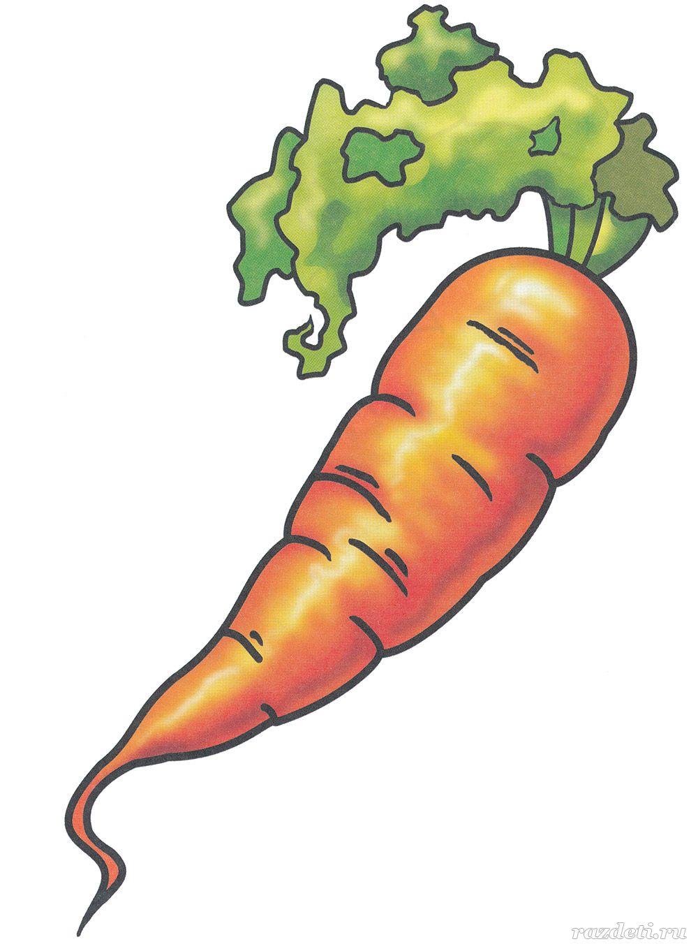 Морковь рисунок картинки