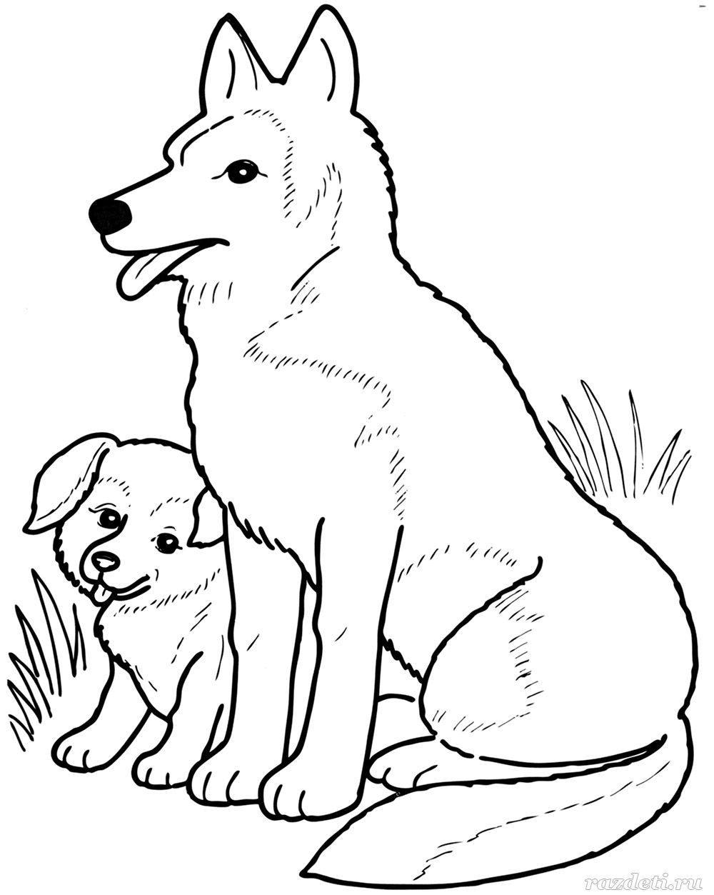 Собака и щенок. Раскраска для детей