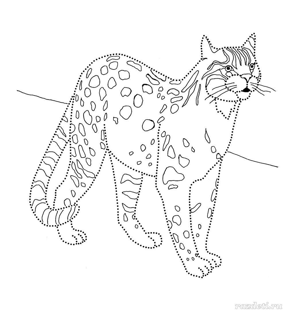 Раскраска дикие кошки и собаки