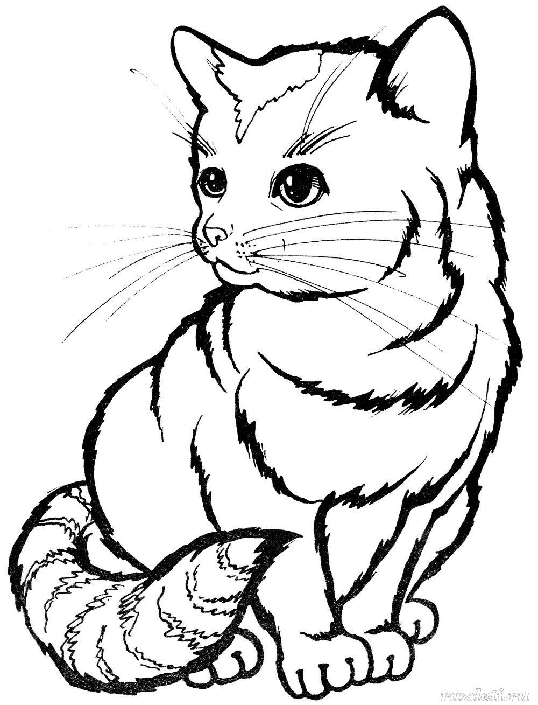 Котенок. Раскраска