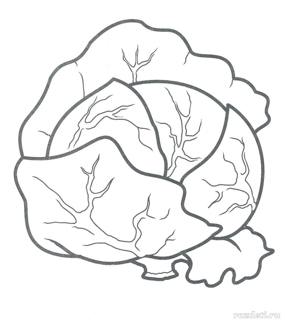 Картинка капуста контур