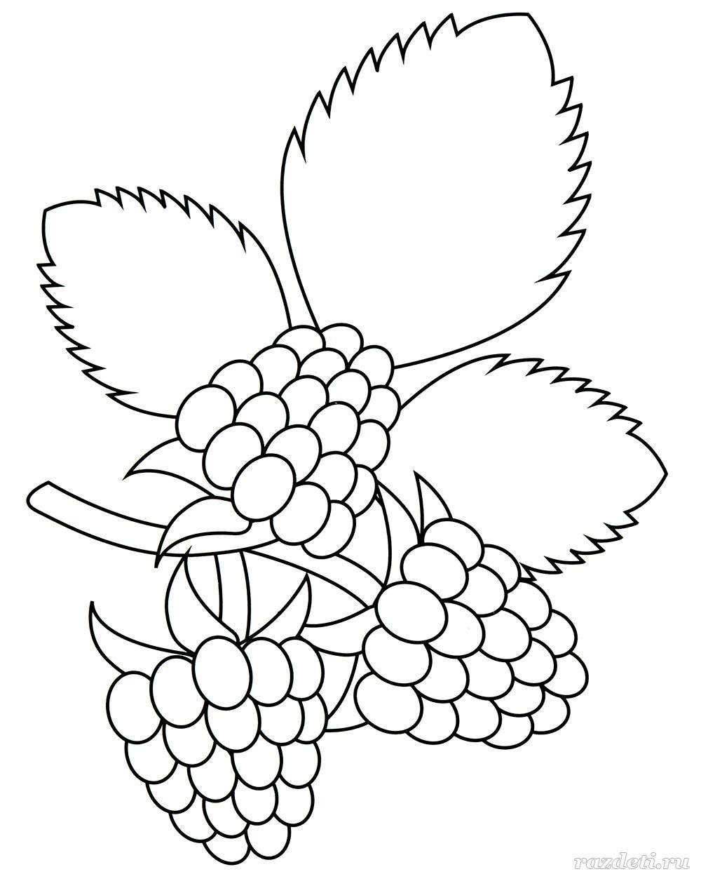 Раскраска. Ягоды малины